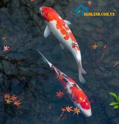 Tranh cá chép mang đến vận may cho gia chủ