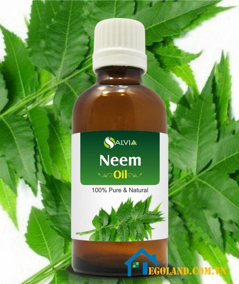 Thấm dầu Neem vào bông gòn sau đó bôi lên các đồ nội thất trong gia đình