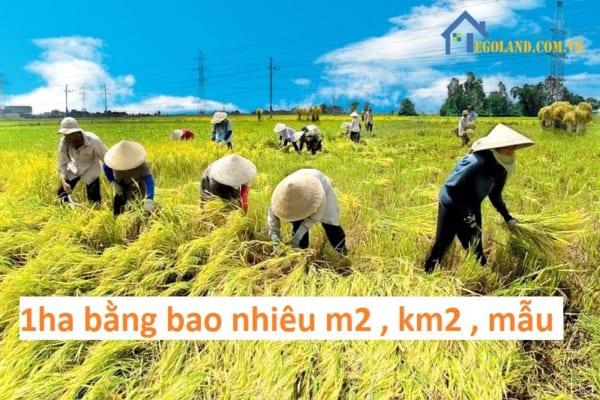 Công, sào và mẫu là những đơn vị cổ được sử dụng để đo lường diện tích đất ở Việt Nam
