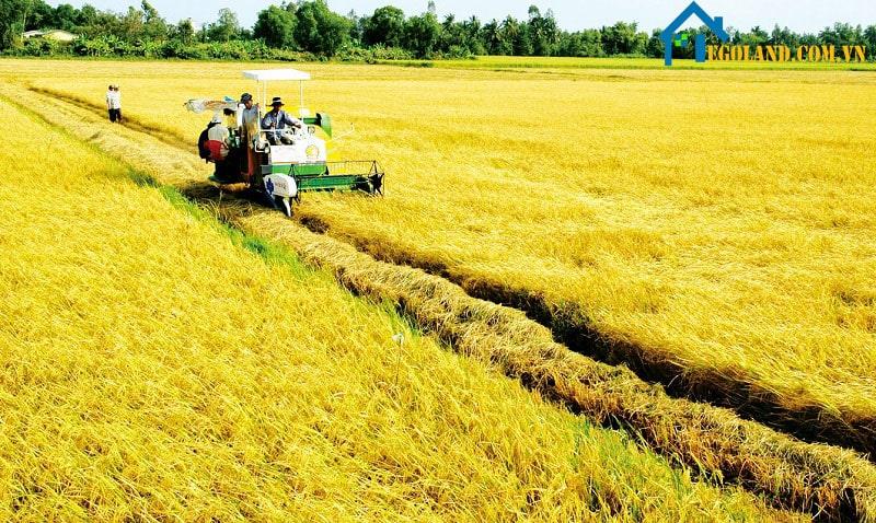 Mẫu được sử dụng chủ yếu để tính diện tích ruộng đất