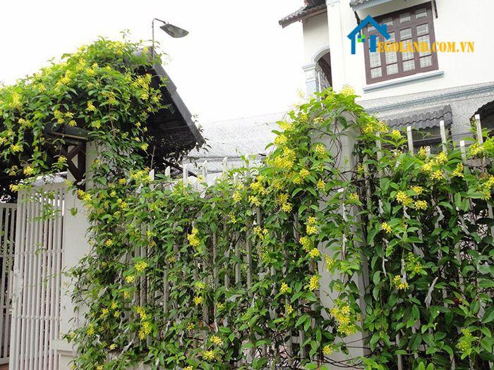 Cây huỳnh đệ - Trồng cây gì trước nhà?