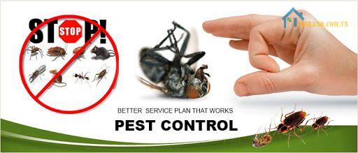 Đơn vị diệt mối tận gốc An Nam Pest Control