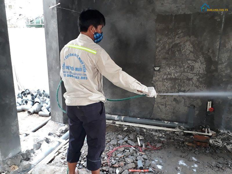 Công ty diệt mối tận gốc tại Hà Nội - Minh Tuấn