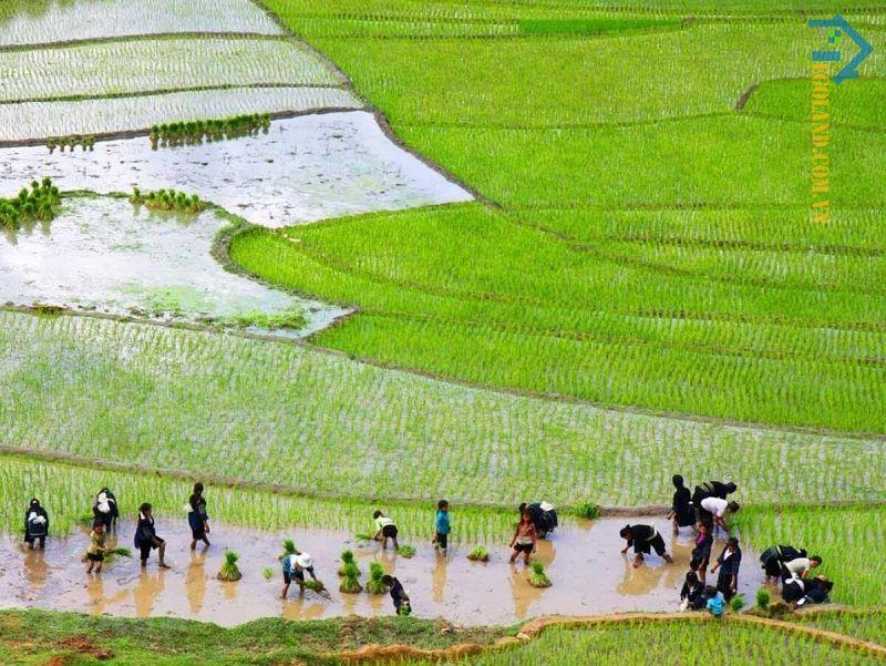 Nền nông nghiệp lúa nước