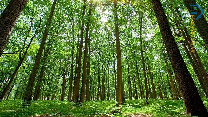 Thiên nhiên giúp cân bằng hệ sinh thái