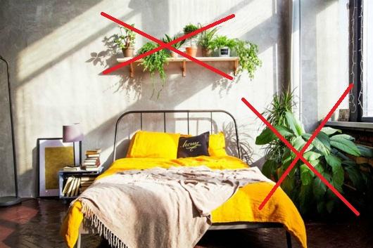 Vì sao ban đêm không nên để nhiều hoa hoặc cây xanh trong phòng ngủ đóng kín cửa