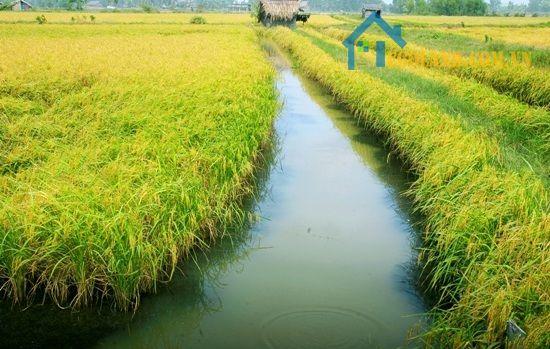 Cá nhân và hộ gia đình được phép chuyển đổi mục đích sử dụng đất trong giới hạn giao đất