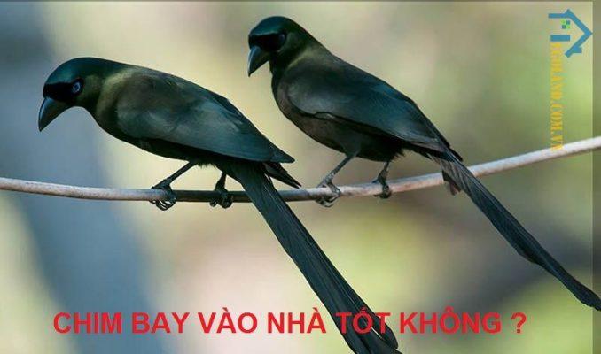Chim bay vào nhà luôn được xem là điềm báo tốt lành và mang đến cho gia chủ nhiều thuận lợi