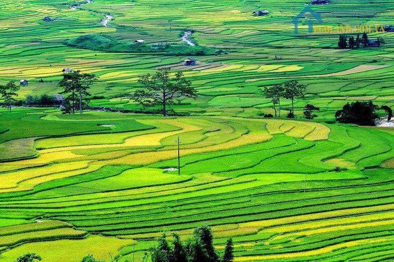 Đất canh tác được chia làm nhiều loại