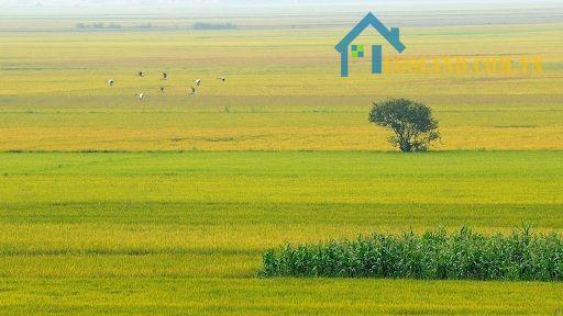 Đất canh tác nông nghiệp không được xây nhà ở