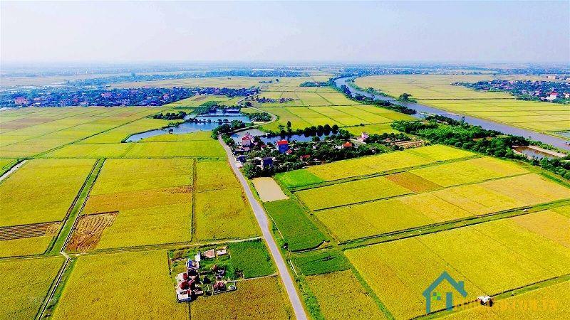LUC là đất chuyên dùng để canh tác lúa nước