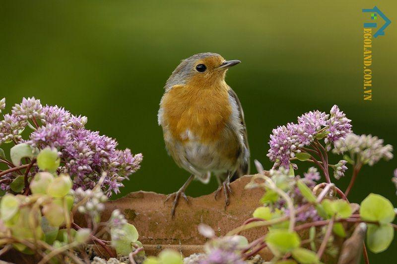 Trường hợp chim bay vào nhà còn gắn liền với nhiều con số may mắn khi chơi lô đề