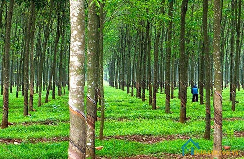 Đất trồng cây lâu năm là gì