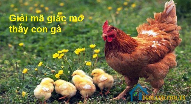 Giải mã giấc mơ thấy con gà