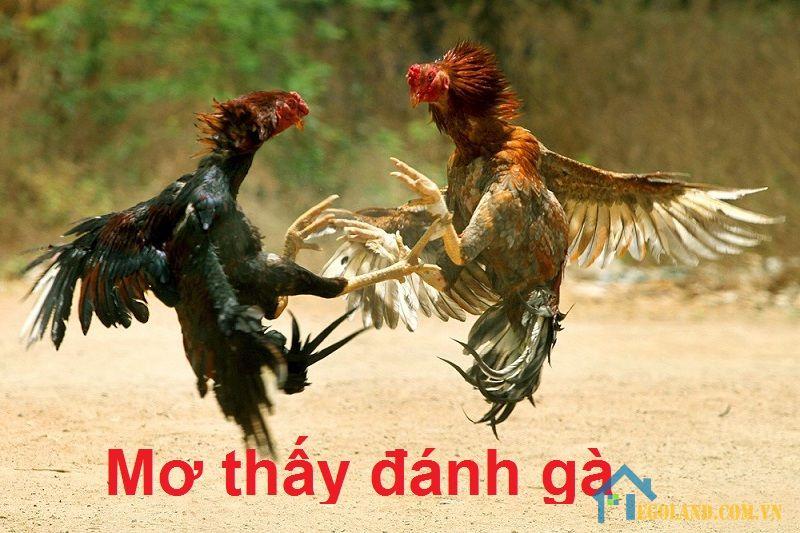 Mơ thấy đánh gà