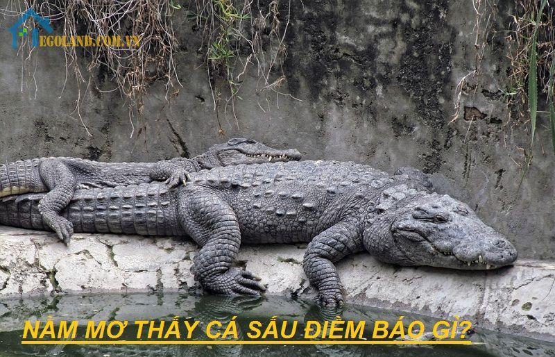 Nằm mơ thấy cá sấu điềm báo gì?