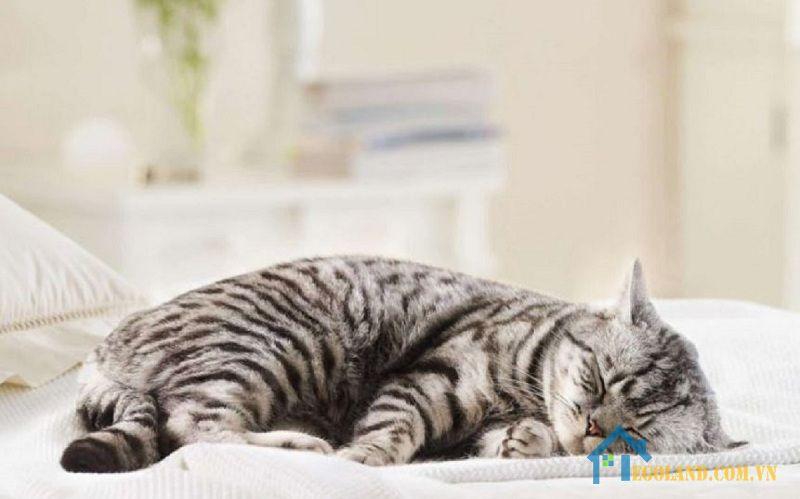 Nằm mơ thấy mèo chết là điềm gì?