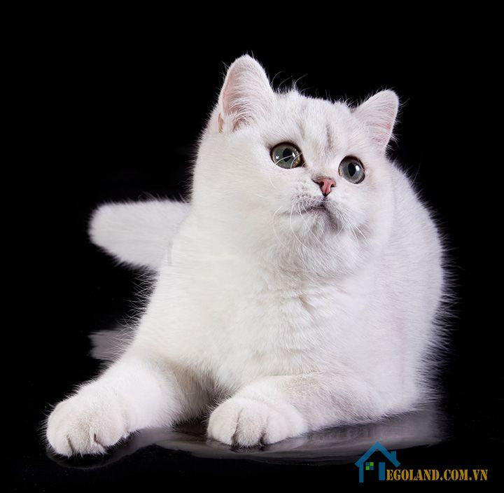 Nằm mơ thấy mèo trắng