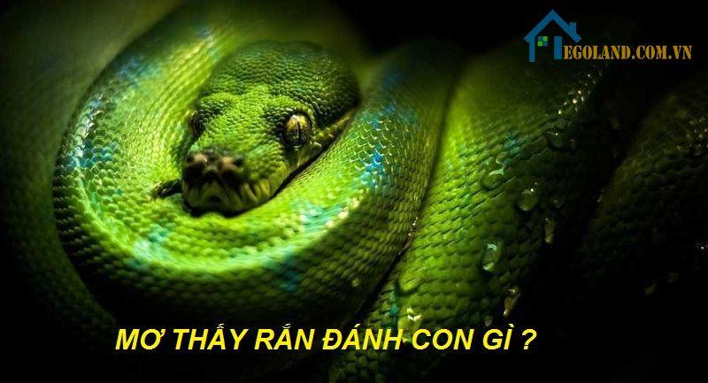 Mơ thấy rắn đánh con gì?