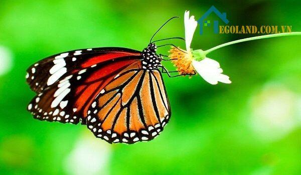 Loài bướm là loài vật tâm linh