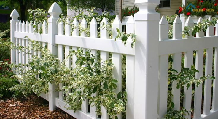 Mẫu hàng rào sắt sân vườn